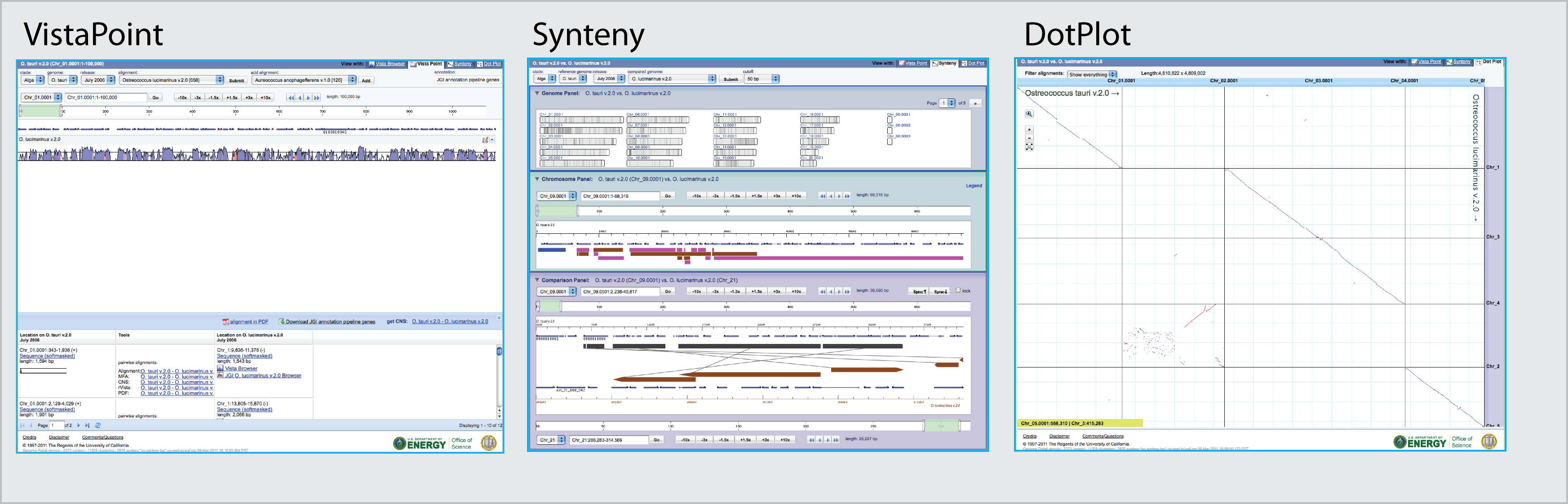 screenshot of synteny
