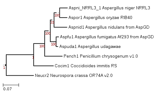 Phylogenetic tree showing position of GENUS_SPECIES