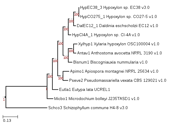 Phylogenetic tree with Biscogniauxia nummularia and comparative fungi