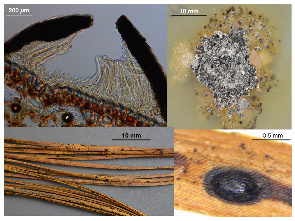 Figure clock-wise from top left: 