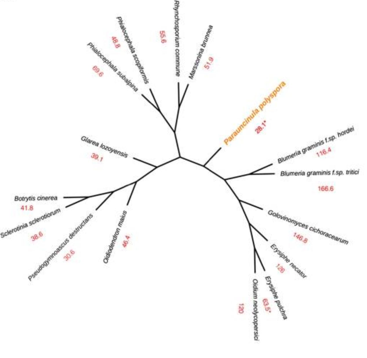 Multilocus phylogeny (cladogram) of selected leotiomycete fungi.