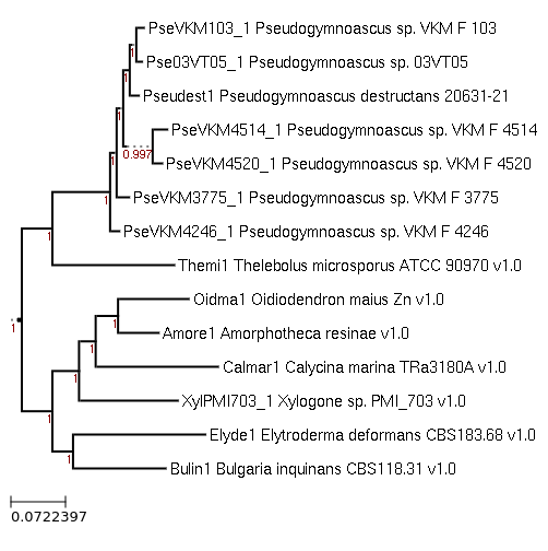 FastTree for Pseudogymnoascus sp. VKM F-3775