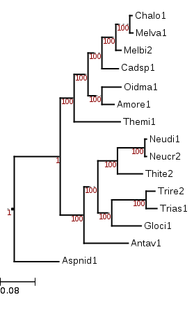 Phylogenetic tree showing that Thelebolus microsporus (Themi1) is an early diverging lineage within the Leotiomycetes.
